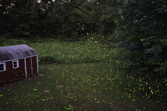 Catskill Fireflies by s58y via flikr
